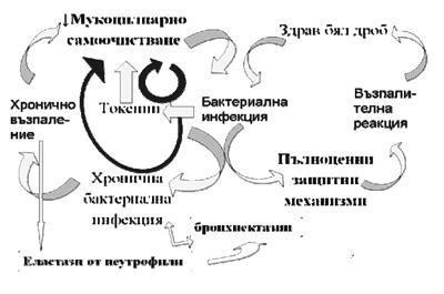 Порочни кръгове в патофи- зиологията на муковисцидозата.