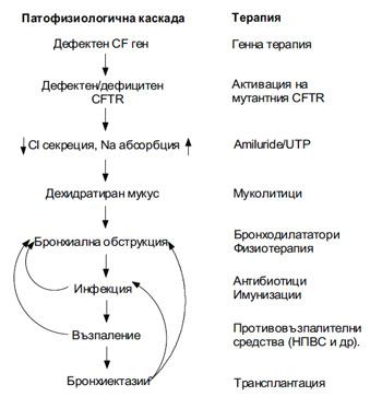 Патофизиологичната каскада при КФ и терапевтичните интервенции на всяка стъпка