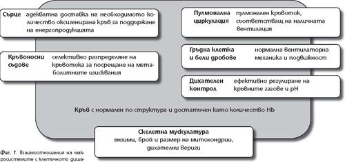 Взаимоотношения на макросистемите с клетъчното дишане и метаболизма.
