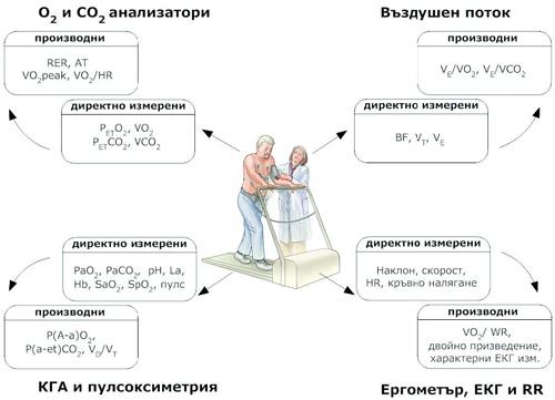 Директно измерени и производни (комбинирани) показатели по време на кардио-пулмонален тест с натоварване (модификация по Wasserman et al.6)