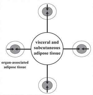 Фигура 1. Схематично представяне на разпределението на мастната тъкан в човешкия организъм.