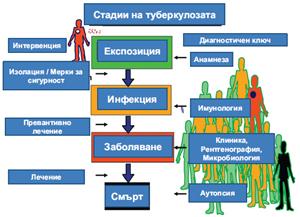 Фиг. 1. Схематично представяне на стадиите на туберкулозата, дефинирани чрез специфични диагностични ключови елементи.