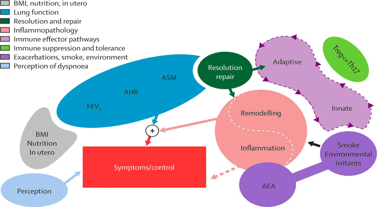 InSpiro_Asthma_Phenotype_2_Fig_1