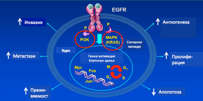 DKalev_LungCancer_TherapyInnovations_fig.1