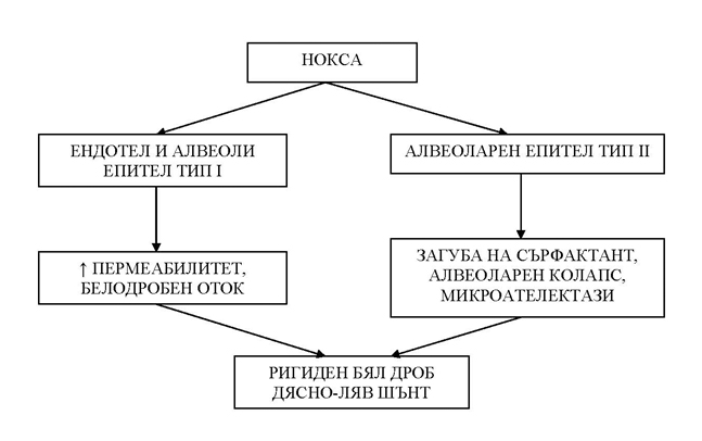 ARDS-fig1