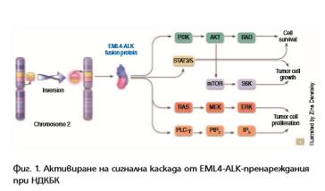 Fig. 1, K K, 2, 2017
